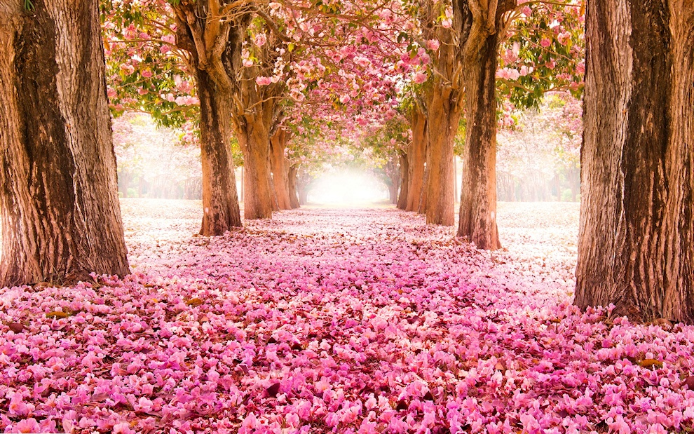 Ein Frühlingspost / wiosenny post